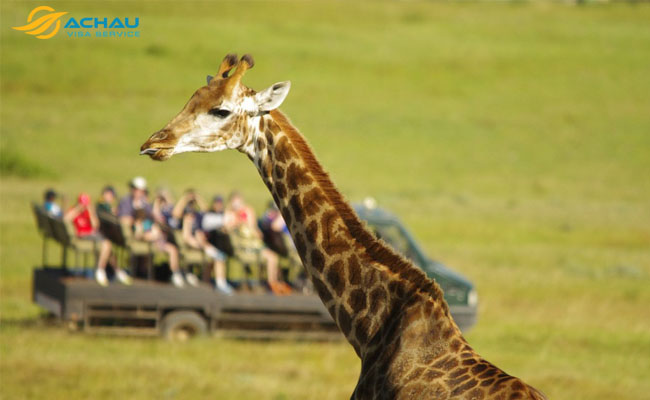 du lịch châu Phi  3