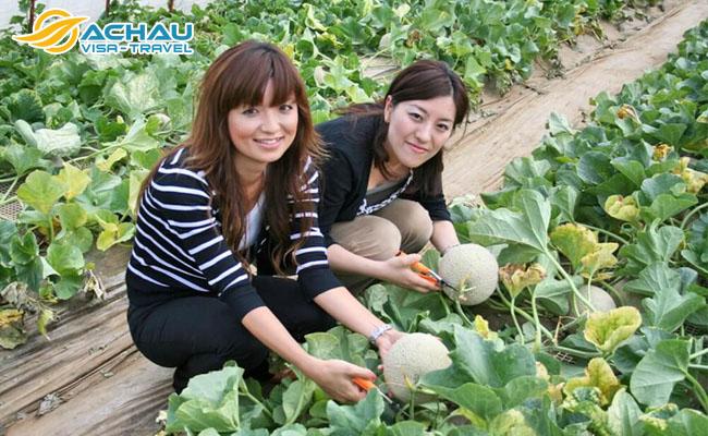 Đắm chìm trong vườn trái cây tươi ở tỉnh Ibaraki – Nhật Bản 5