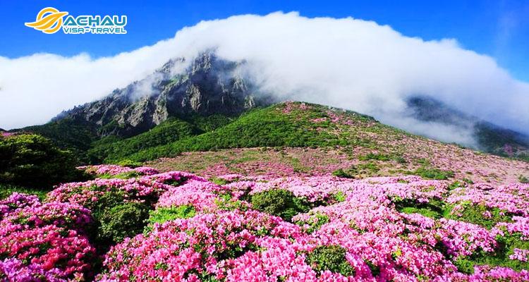 Đỉnh núi Seongsan Sunrise