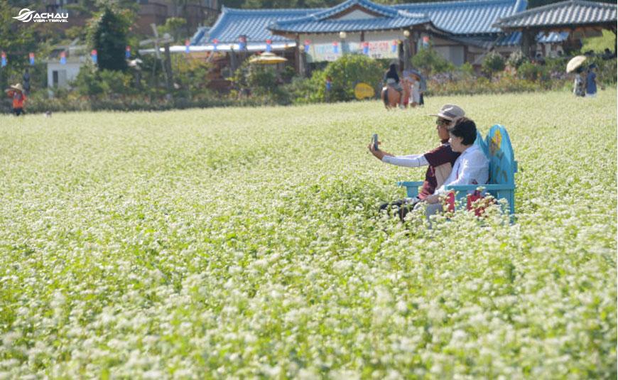 Du lịch Hàn Quốc để có cơ hội tham gia lễ hội hoa Kiều mạch 1