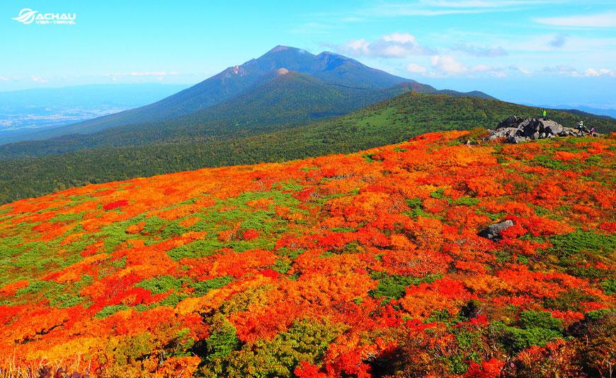 Những trải nghiệm không nên bỏ qua khi du lịch Nhật Bản vào mùa thu 5
