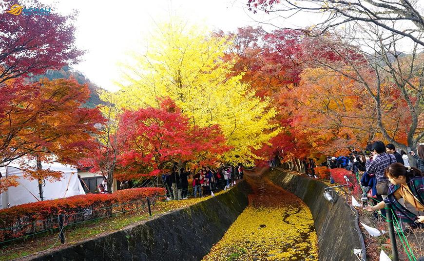 Du lịch Nhật Bản vào mùa thu có thể tham gia vào những lễ hội nào? 2