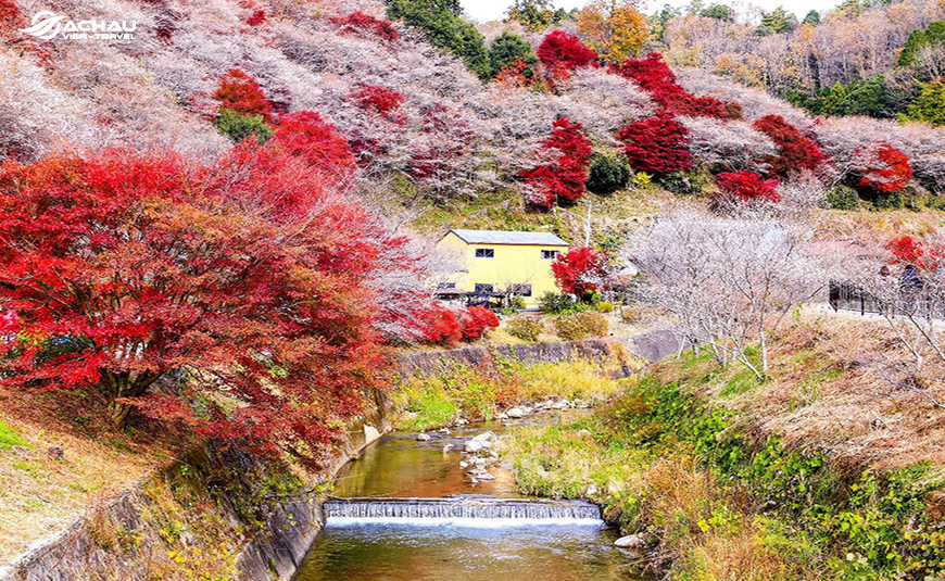 Du lịch Nhật Bản vào mùa thu có thể tham gia vào những lễ hội nào?