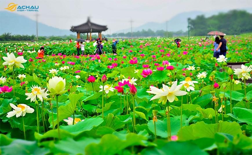 sắc xuân trên đảo Jeju 3