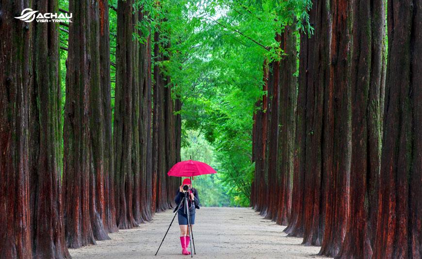 Khám phá mùa hè xứ kim chi với tour du lịch Seoul - Everland - Nami